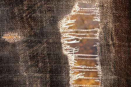 ಸೋತ ತಲೆಮಾರು